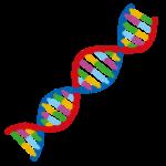 【相談】遺伝子検査通りの食事をしても痩せません。【自燃食レッスン】